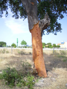 cork tree harvested bark Portugal