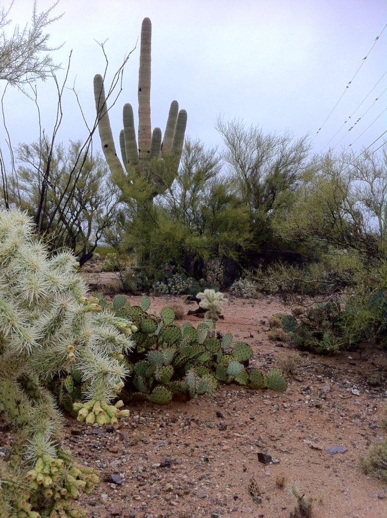 Desert plants captured by top slow travel blog Half the Clothes author on New Year's Day