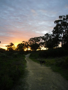Martie's evening walk - can't complain too much about this house-sitting responsibility!