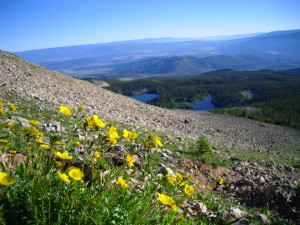 view from mountainside with yellow flowers in foreground and lakes in the lower distance