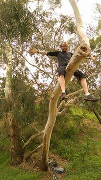 a man sitting on a eucalyptus tree during work in australia